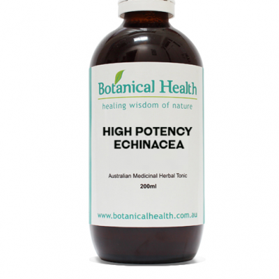 High Potency Echinacea